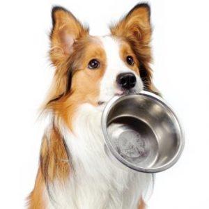 dog holding bowl